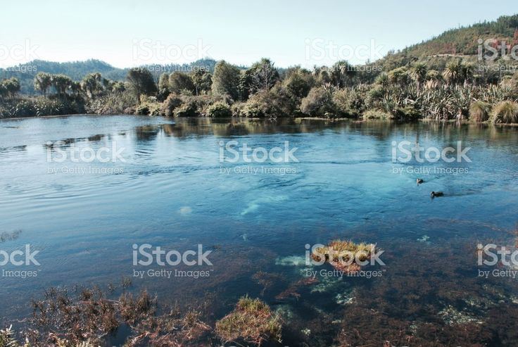 Pure Fresh Water Landscape, New Zealand/ Aotearoa royalty-free stock photo