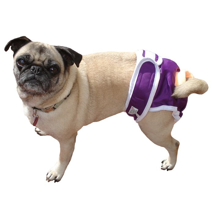 79 Best Images About Dog Nappies Diapers On Pinterest