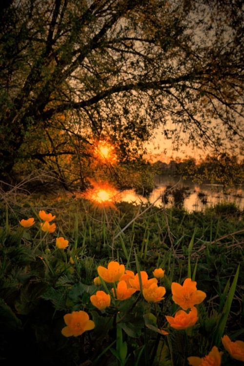 ,: Beautiful Natural, Orange Flower, Natural Beautiful, Bears Hugs, Beautiful Places, Beautiful Sunset, Landscape Photography, Sunri Sunsets, Sunrises Sunsets