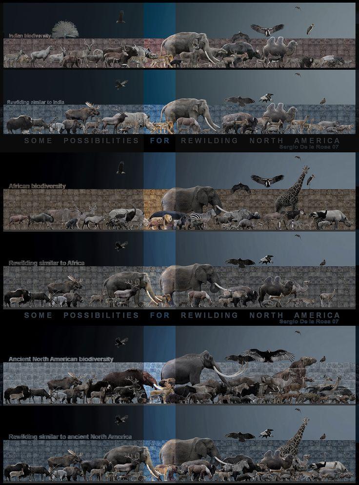 rewilding by serchio25.deviantart.com on @DeviantArt