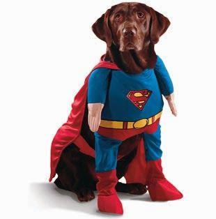 101 mascotas | disfraces para perros | hacer disfraz para perro: 10 excelentes disfraces para perro