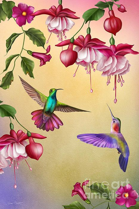 I uploaded new artwork to plout-gallery.artistwebsites.com! - 'Humming Birds And Fuchsia-jp2784' - http://plout-gallery.artistwebsites.com/featured/humming-birds-and-fuchsia-jp2784-jean-plout.html