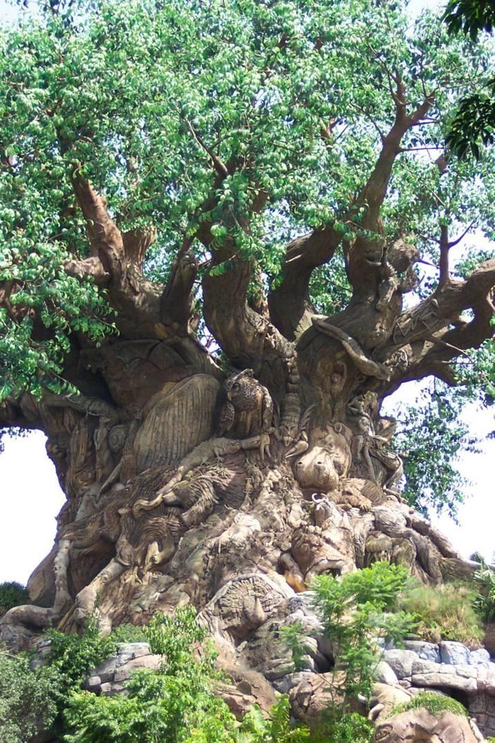 Old tree ~ South Africa - Baobab Tree