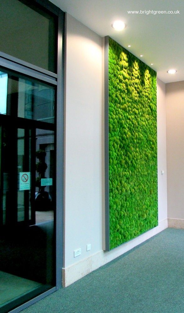 Preserved Bun Moss Wall Panel with a simple Grey Frame