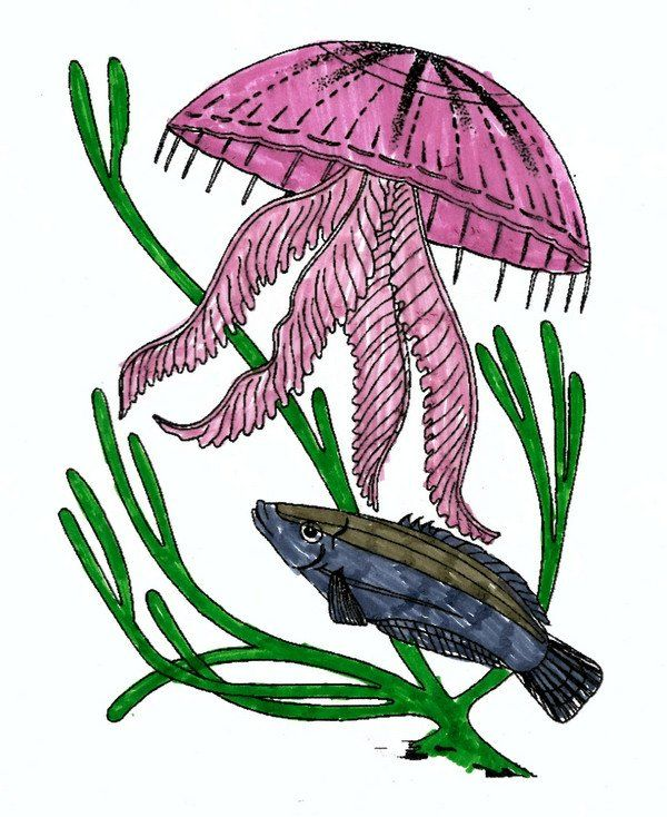 Coloring Pic Of Fish How To Color Jellyfish Attack A Fish Coloring Page For Kids In 2020 Fish Coloring Page Easy Coloring Pages Coloring Pages