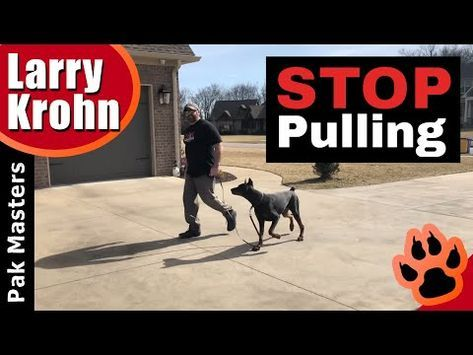 How To Teach Any Dog To Stop Pulling And Walk Nicely On A Loose