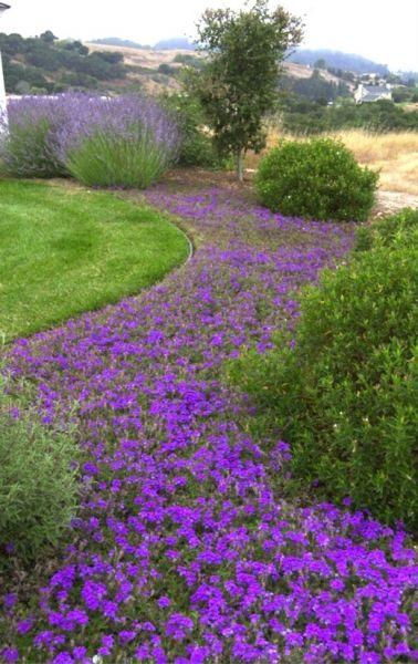 Garden Ideas Landscaping Ideas Drought Tolerant Purple