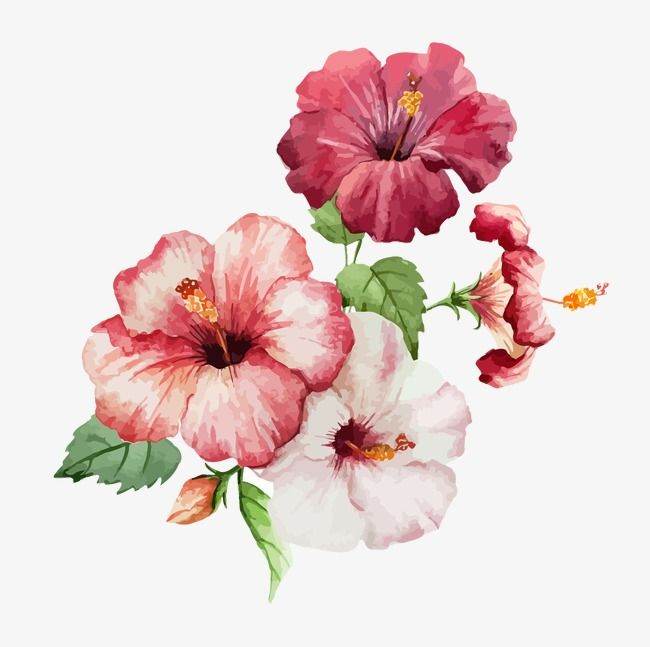 Watercolor Flowers Watercolor Vector Watercolor Fresh Png Transparent Clipart Image And Psd File For Free Download Flower Painting Watercolor Flowers Flower Art