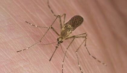 Why do mosquitos bite me? http://www.smithsonianmag.com/science-nature/why-do-mosquitoes-bite-some-people-more-than-others-10255934/