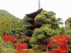 秋に見たい西の京 山口県の国宝瑠璃光寺五重塔です   五重塔というと奈良県の法隆寺だけと思っていませんか  実は全国にあるんですよ  その中でも現存する五重塔の中で10番目に古く 奈良県の法隆寺と京都府の醍醐寺にある五重塔と並んで日本三名塔の一つに数えられるのがこの山口県にある瑠璃光寺五重塔  紅葉の時期になると周りの木々が赤く染まり建物とのコントラストがとってもキレイ 訪れるならこの季節おすすめですよ() tags[山口県]