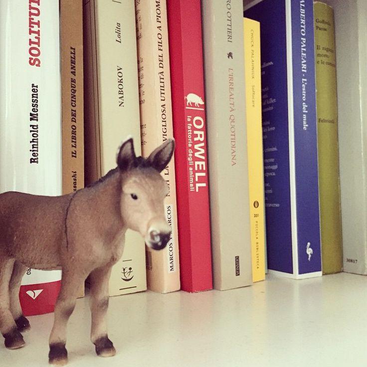 #ioleggoperché le #librerie danno ad una casa la giusta dignità. #libri #leggere #book