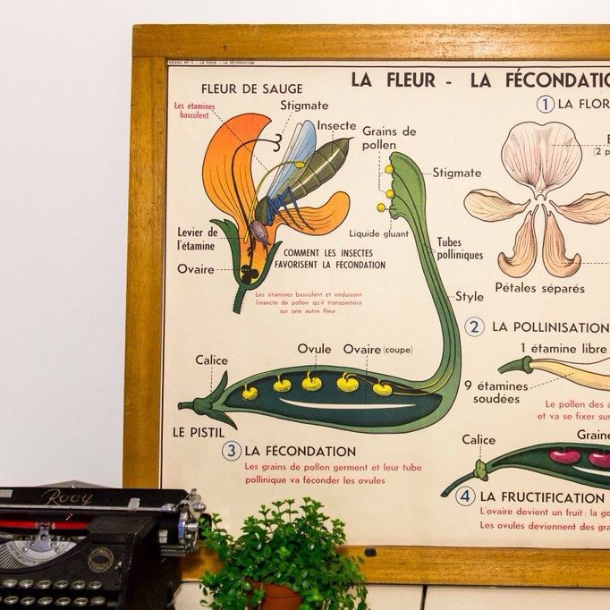From French 50's classroom to your home : vintage french charts are now available in the shop.