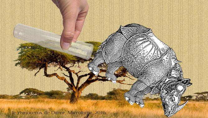 Allons bon, l'humanité ne peut pas se passer des obscurs pouvoirs de la corne de rhinocéros. Pour répondre aux insatiables besoins du marché, des petits génies de la biologie moléculaire ont créé la vraie-fausse corne de rhinocéros à partir d'ADN de synthèse.