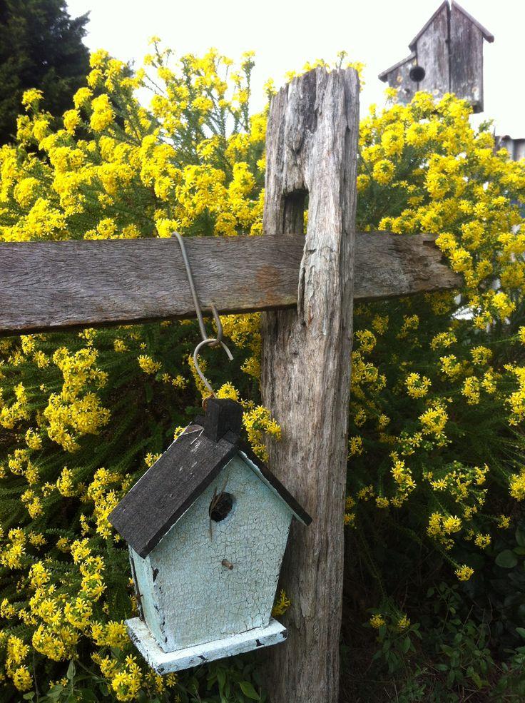 80 best My Garden In Australia images on Pinterest | Flora, Plants ...