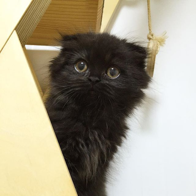 #cat #gimo #babygimo #까꿍 #놀랬긤