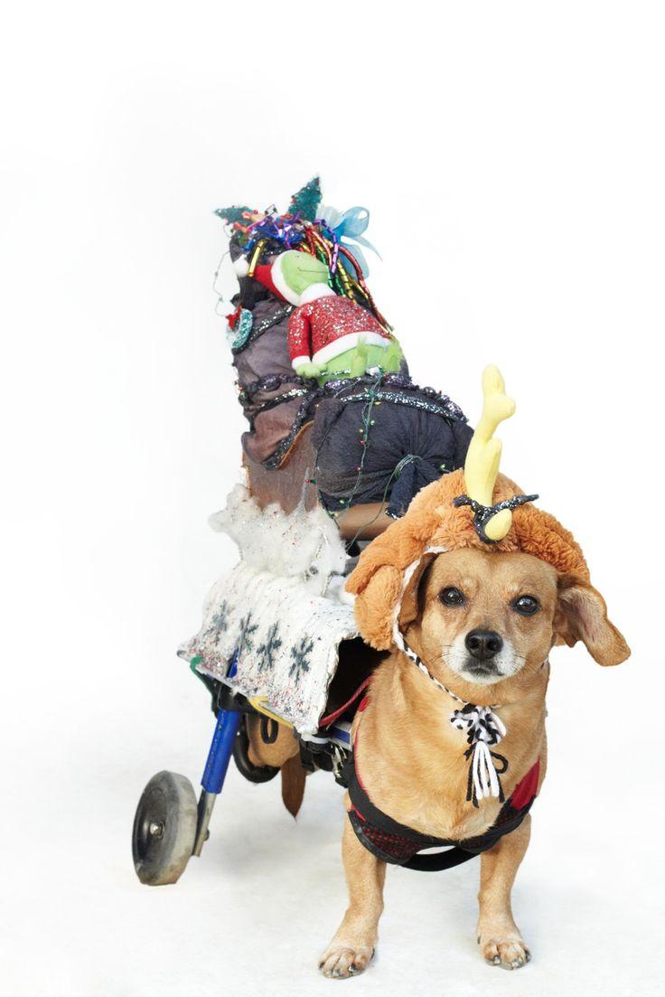 375 best Spooky Pet Costumes images on Pinterest | Pet costumes ...