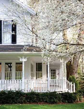 porch, blossoming tree