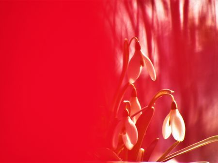 My red spring Photo by Plesea Magdalena — National Geographic Your Shot