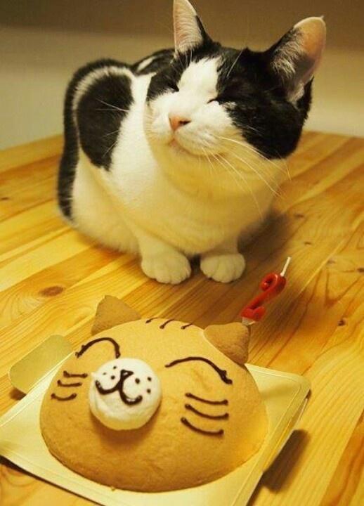Даже в кошачий день рождения должен быть торт!