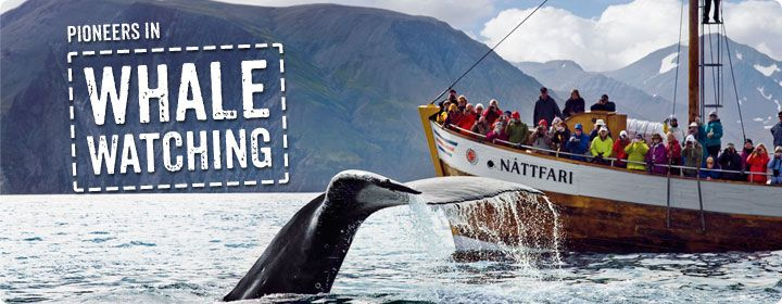 Pioneers In Whale Watching