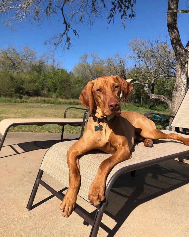 Try to beat this Texas heat! texasheat jasperathisfinest