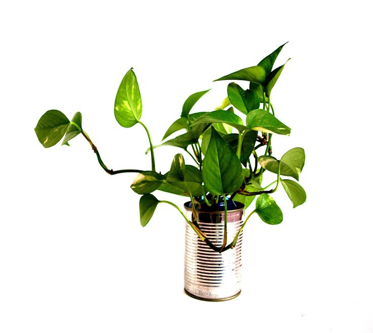 Design by Federico Poletti #design #green #free #nature #metal #tin