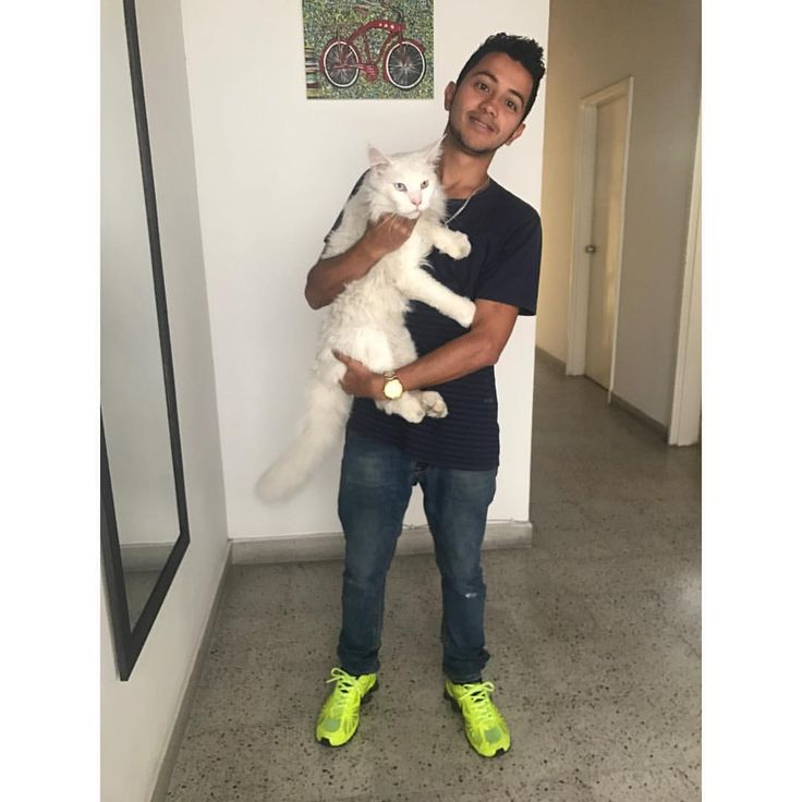 """621 Likes, 10 Comments - 🐾Cezar The Travelling Cat 🐈 (@cezars.crew) on Instagram: """"Let me present 'FAN OF THE WEEK' Cristian @cristianidarraga from Medellin 🇨🇴 who was kind enough to…"""""""