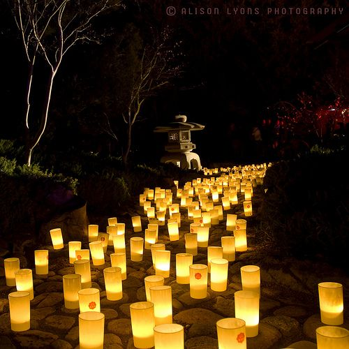 Lamp Bar Nara Prefecture Nara: 33 Best Images About Light Festival-lanterns On Pinterest