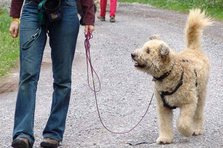 """Einstiegs- und Kreativitätsübungen Wenn Ihr Hund die Bedeutung des Clickers (oder eines beliebigen anderen Markersignals) verinnerlicht hat, dann können Sie im Alltag sofort loslegen und erwünschte Verhaltensweisen nach Belieben """"einfangen"""": zum Beispiel, wenn Ihr Hund auf dem Spaziergang Blickkontakt zu Ihnen aufnimmt oder sich hinsetzt, anstatt den Besuch anzuspringen. Wenn Sie und Ihr Hund jedoch …"""