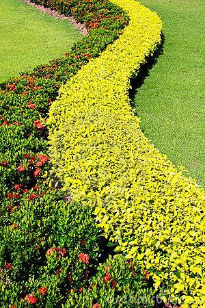 Shrubs garden decoration