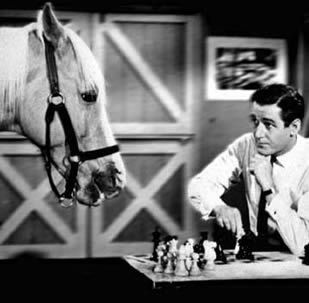 Mister ed !! Wet my pants laughing when i saw reruns of this on the maori channel (Mr Ed speaks maori!)