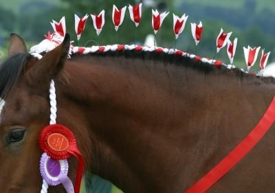 horse tail braiding instructions