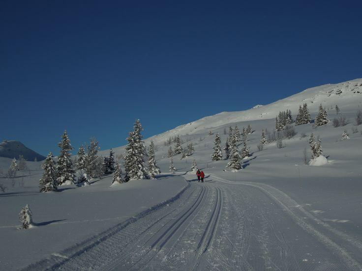 On the Svartfjell Rundtloipe