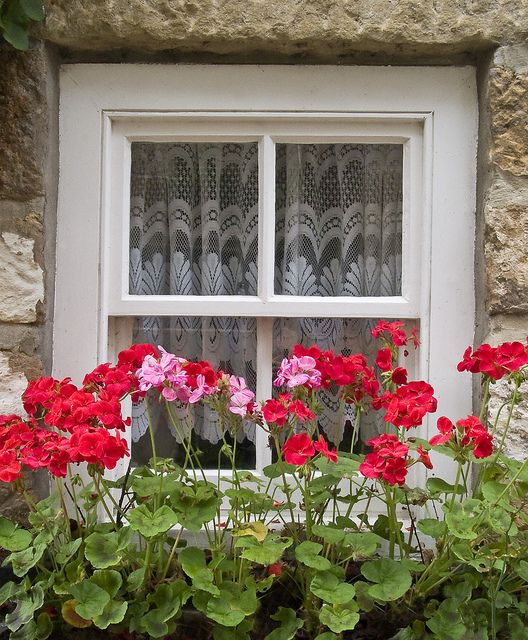 Window box Geraniums....when I was young we lived in Southern California.  Behind our home, geraniums lined the entire wall...the clothes line was near by, while Mama hung laundry, I played in the geraniums...a good memory :) ...I remember the fragrance...