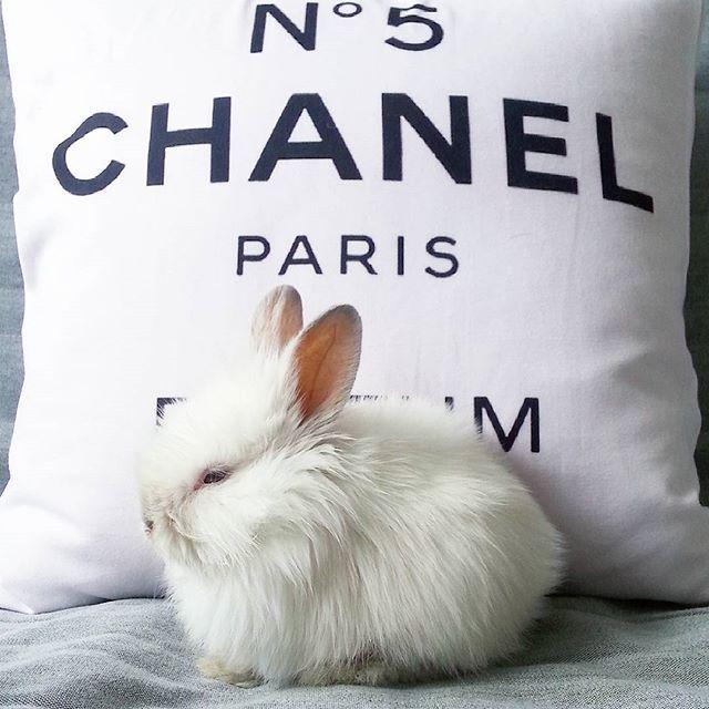 Hello world  #followwhiterabbit #nowydomownik #trusia #pusia #white #rabbit #modnisia #chanel #missdecor #bunny #instaanimal #sosweet