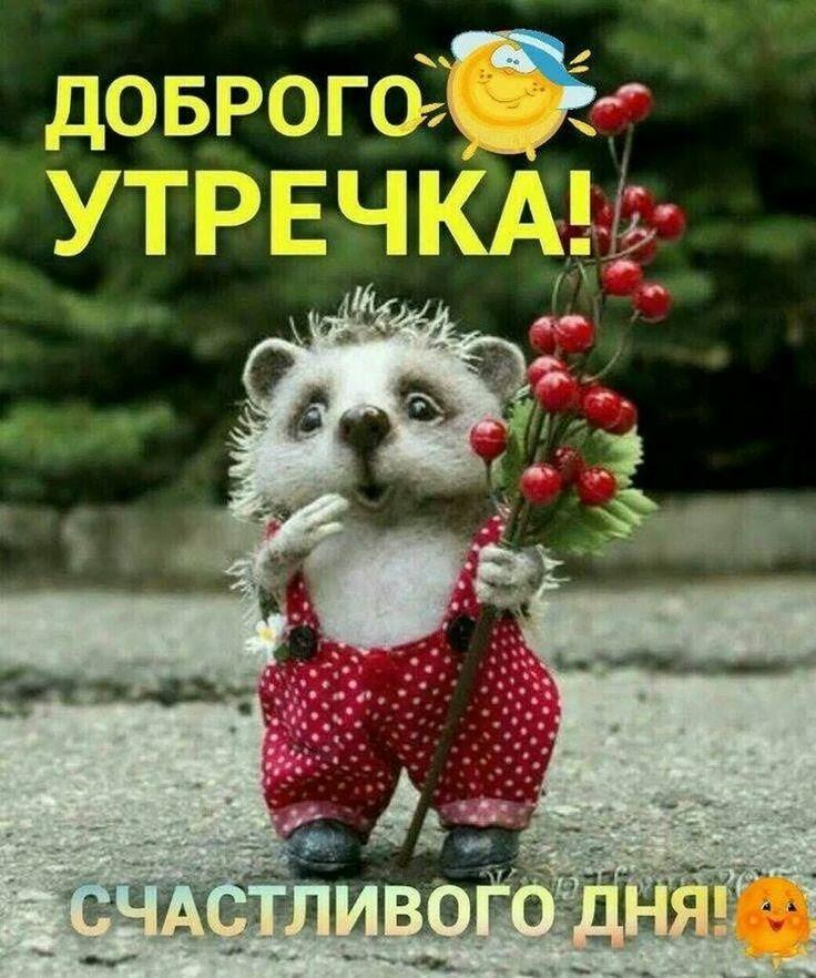 приветствие с добрым утром прикольные в картинках и позитивные переводе