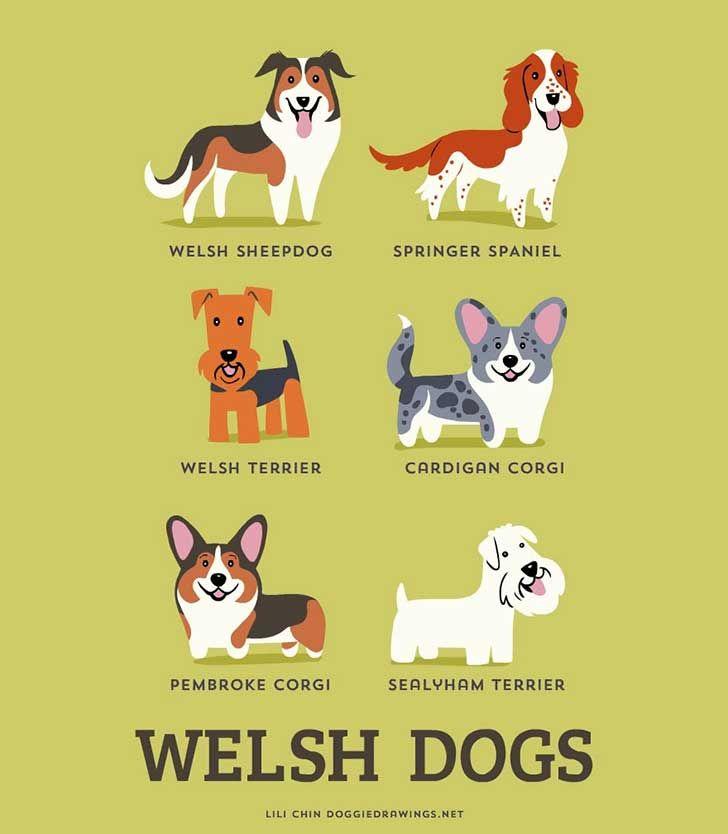 Welsh dog breeds