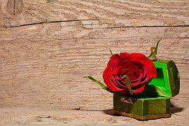 Rosa, Vermelho, Flor, Arca Do Tesouro