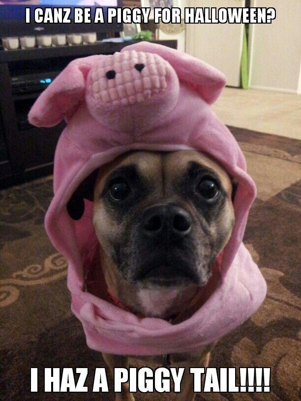 Funny Puggle - YouTube