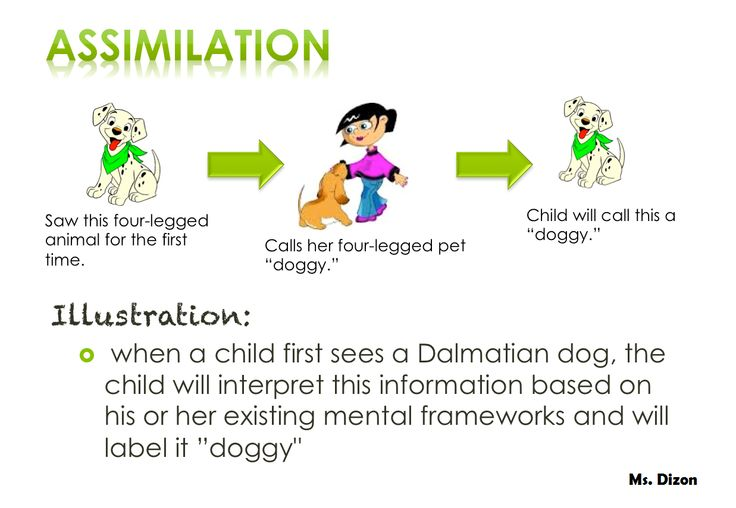 Assimilation Pictures Assimilation- interpre...