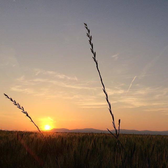 Manchmal reicht schon ein Lächeln, um aus seinem Herzen ein kleines Paradies zu machen. #love #sunset #sonne #leben #liebe #genießen #paradies #smiling #keepsmiling #loveisintheair #lifeisgood #nature #naturepics #pictureoftheday #enjoy #heart #mylove