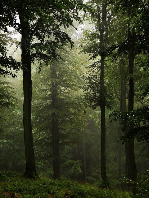 extemporaneous-travels: High Forest… in the rain by JoannaRB2009 on Flickr.