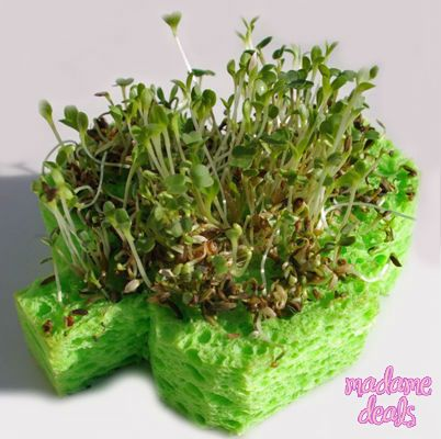 Cool project that you can do with your kids for St Patricks Day Learn how to make Lucky Shamrock Sprouts