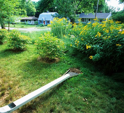 Rain gardens are not only beautiful, they also help reduce stormwater runoff.