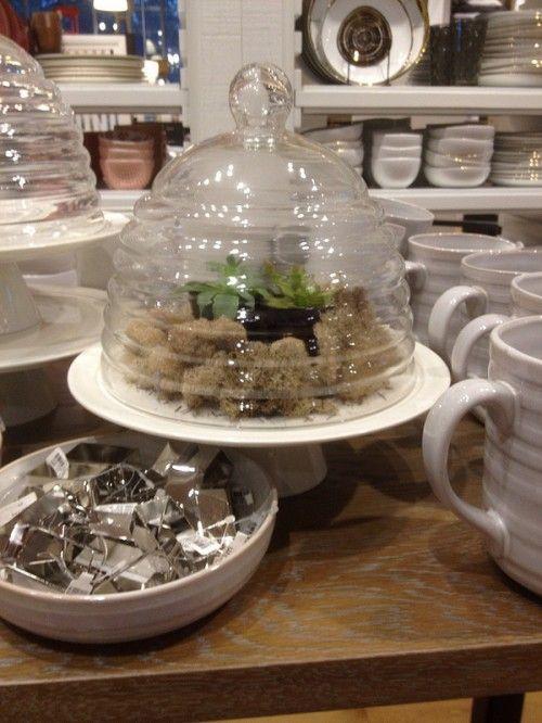 Cake plate terrarium