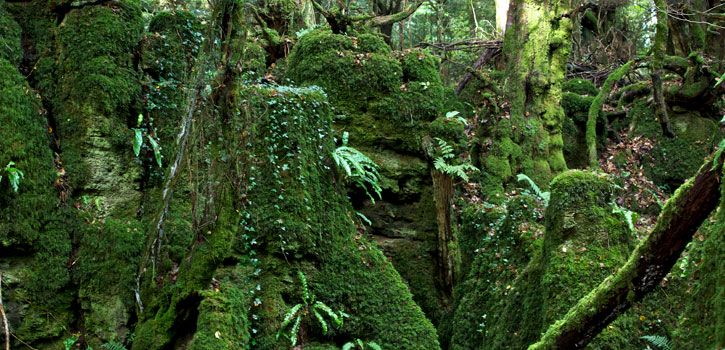Emerald Greens at Puzzlewood, Coleford