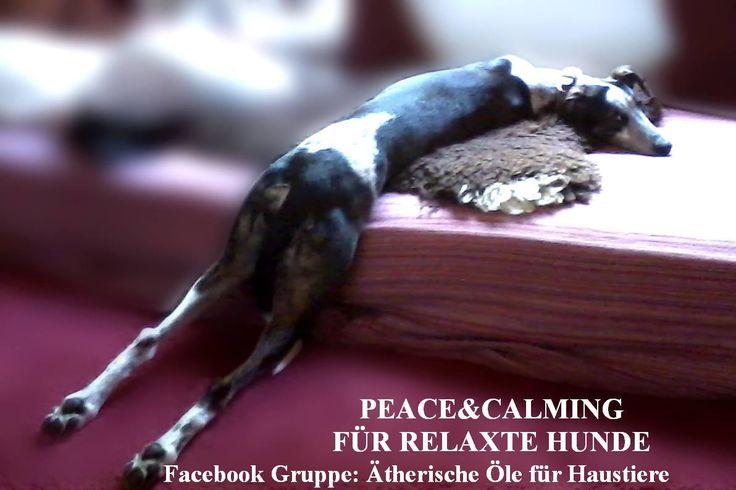 "Relaxte Hunde mit Peace&Calming Ölmischung. Facebookgruppe""Ätherische Öle für Haustiere"""