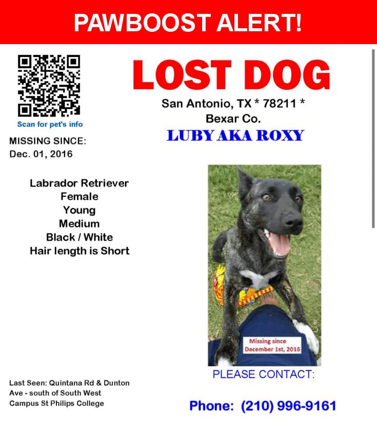 Please spread the word! Luby Aka Roxy was last seen in San Antonio, TX 78242.  Description: Luby aka Roxy, is a brindle labrador mix female dog with short dark/black hair and white paws and a white underbelly. She is almost a year old.  Her name on her chip is Luby, but we call her Roxy.  It looks like a good samaritan might havefound her and taken her to the city veterinary hospital at 818 Austin St, San Antonio, TX 78208, to get her microchip read, but we dont know who did so, because the…
