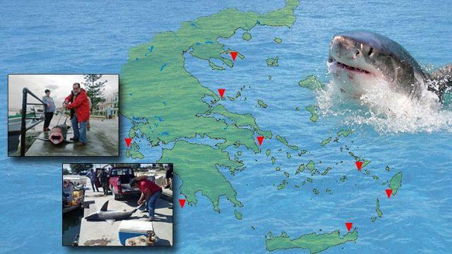 Δείτε που ζουν οι καρχαρίες στην Ελλάδα