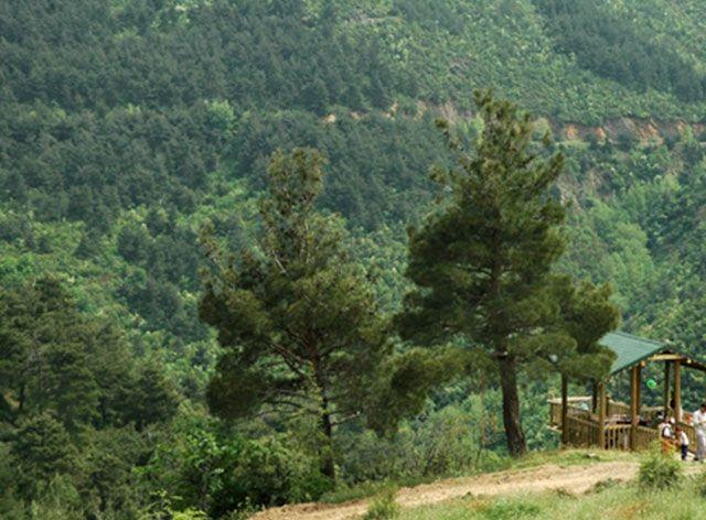 ATATÜRK KENT ORMANI 695126 Odunluk Mahallesi arkasında 150 hektarlık ormanlık alanda içerisinde olan Atatürk Kent Ormanı, doğayla buluşup kent karmaşasından uzak soluk alınabilecek piknik alanları, 3,5 kilometre parke yol, bir ahşap köprü, 6,5 kilometre yürüyüş yolu ve bisiklet yolu ile bir doğa cenneti olan Kent Ormanında ayrıca 6 seyir terası, 7'si barbekülü olmak üzere toplam 10 tane yağmur barınağı, 10 kamelya, bir gözlem kulesi, 2 adet çocuk oyun alanı,